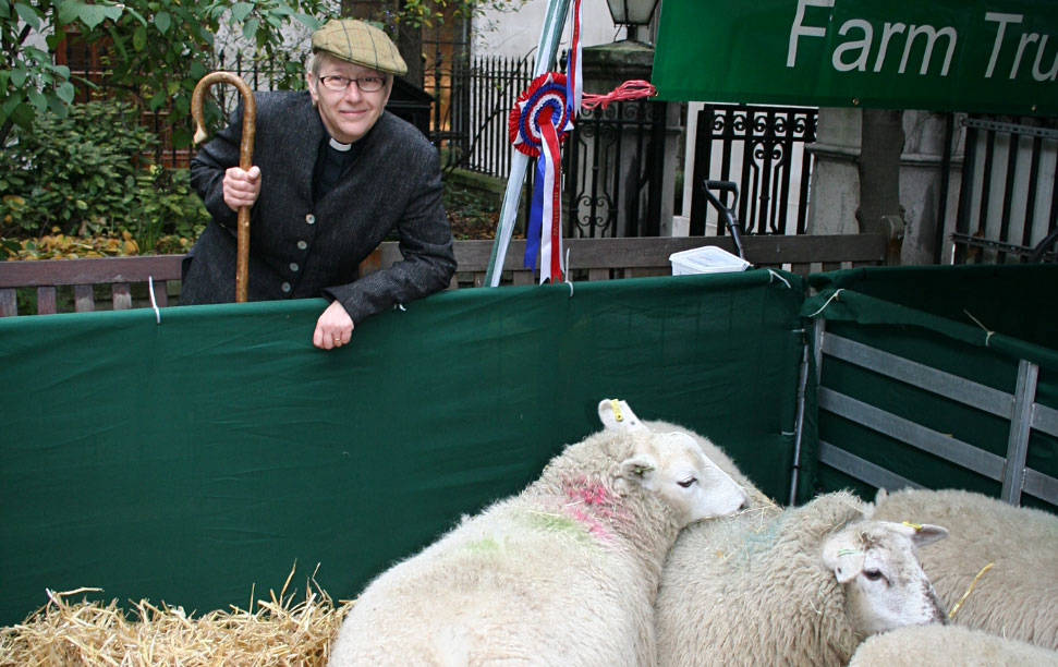 Rector with shepherd's crook by pen of sheep for British Livestock Industry service